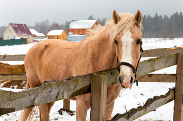 horse standing behind the fence