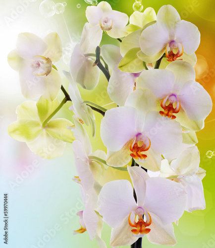 canvas print picture Beautiful flowers Japanese Orchid.Beauty.Flora
