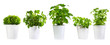 Leinwanddruck Bild - set of potted green plants
