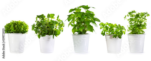 set of potted green plants - 59972855