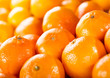 canvas print picture - orange fruits