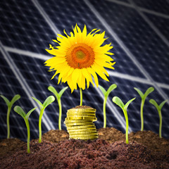 Investments in renewable resources.