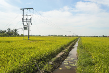 Electric pole on a paddy field with blue sky