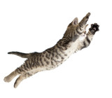 Flying or jumping kitten cat isolated on white - 59983647