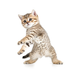 Funny dancing kitten on white background