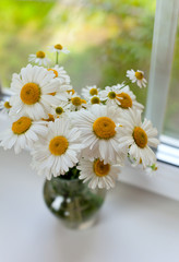 daisies on windowsill