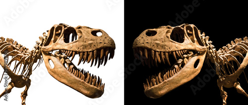 Tyrannosaurus Rex skeleton isolated on black and white backgroun