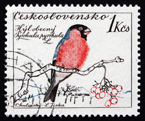 Postage stamp Czechoslovakia 1959 Common Bullfinch, Bird
