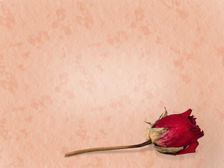 Love lost faded rose background