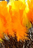 Birch twigs with orange feathers for decoration.