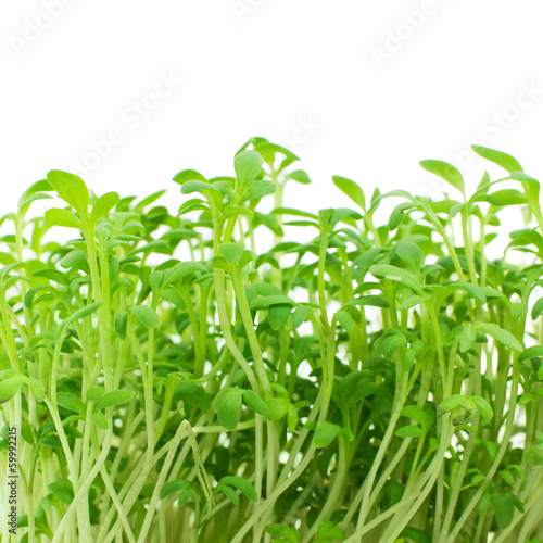 Fresh sprouts of garden cress isolated on white
