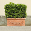 elegant ceramic plant box, tuscan craft