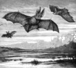 Long Eared Bats