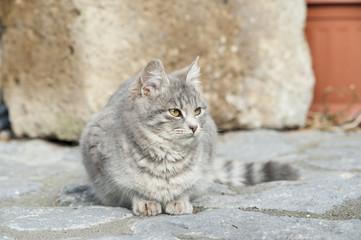 Cat among stone