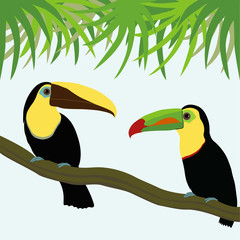 Pair of toucan