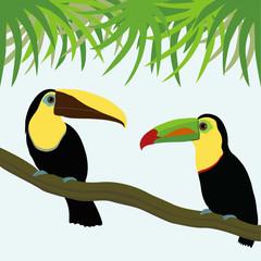 Pair of toucan
