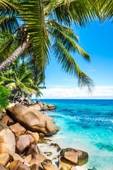 tropical beach with palm
