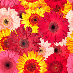 Seamless Pattern from Vibrant Gerbera Flowers