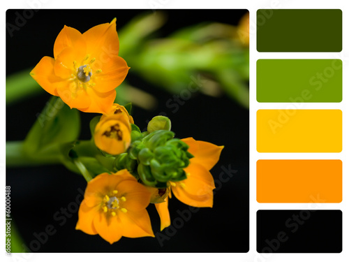 Flower colour palette swatch