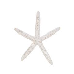 starfish isolated