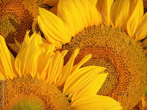 In de dag Zonnebloem sunflowers macro
