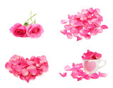 Rose and petal isolated on white background