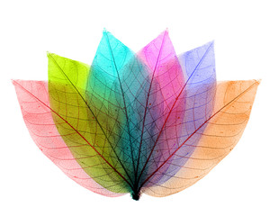 Color leaves abstract shape on white background.