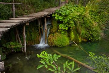 Bridge in deep forest Landscape