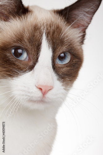 Cat portrait closeup