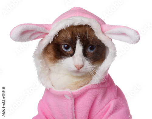 Cat in pink rabbit costume isolated on white