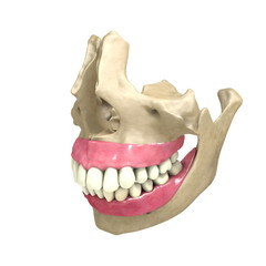 Teeth front View 03