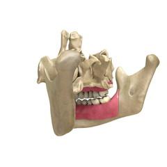 Teeth back View 04