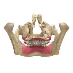 Teeth back View 05