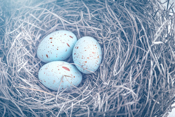 Three easter eggs in the nest for easter with dreamy blue toning