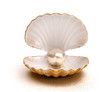 Leinwandbild Motiv shell pearl