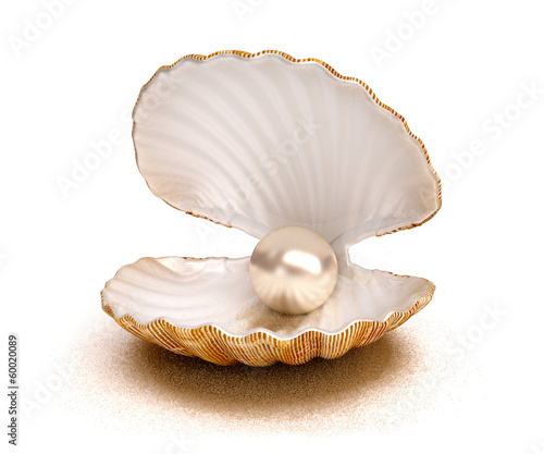 shell pearl - 60020089