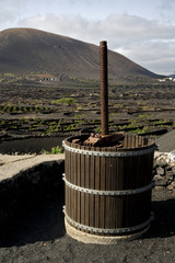 press viticulture  winery lanzarote spain la geria vine