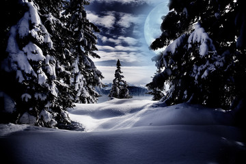 Winter forest by night