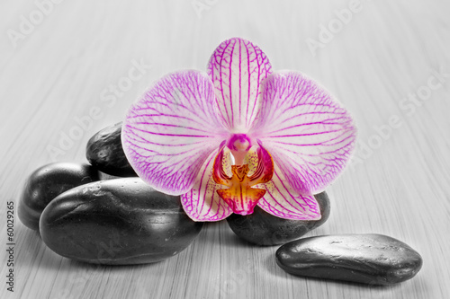 Pink orchid on a wooden background