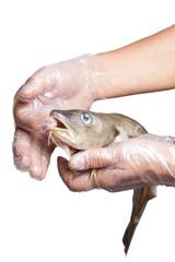 Raw fish.