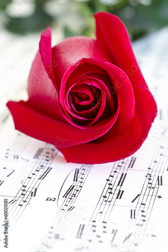 Musical rose and red rose