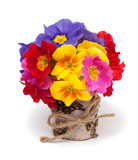 bouquet of primula flowers