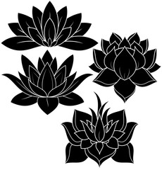 illustration of great lotus