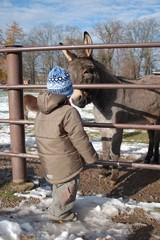 Kind und Esel im Blickkontakt