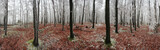 Forest winter 360 degrees panorama