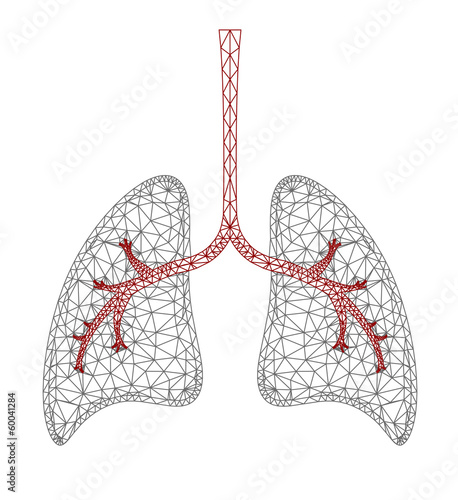 Lung Graphic