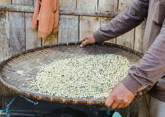 coffee beans in threshing basket