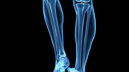 Medical animation of a walking guy - visible bones