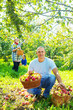 family gathers apples in  garden