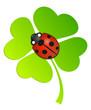 Grünes Kleeblatt mit Marienkäfer